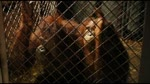 Bande Annonce : L'Odyssée de Pi